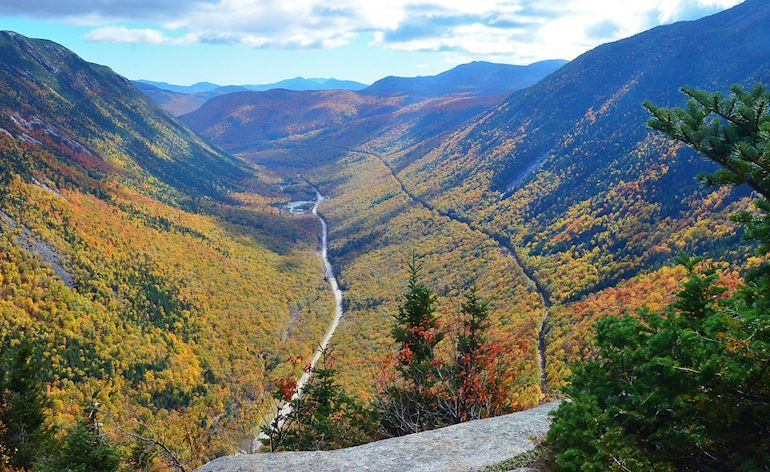 Crawford Notch Foliage